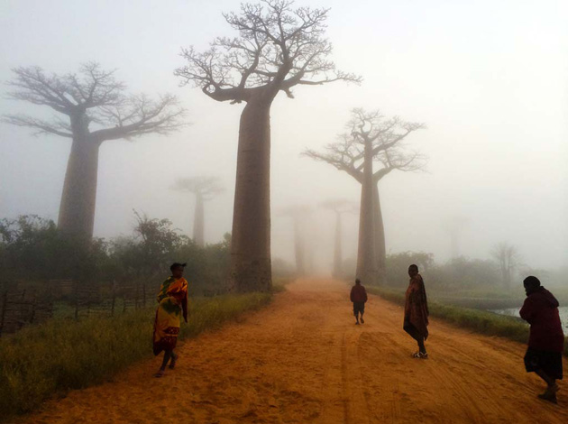 An image of Madagascar taken by Arizona Coordinator Matt Cohen