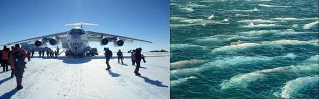 arctic_plane_belugas